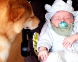 Dog's Reaction To Mom Bringing Home Newborn Baby Has Quickly Going Viral