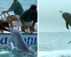 Dolphin Goes In For A Kiss From A Dog And Then Jumps For Joy