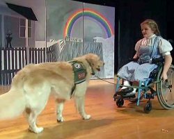 Student In Wheelchair And Her Service Dog Star In School's 'Wizard Of Oz'