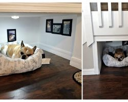This Man Built His Dog A Bedroom Under The Stairs And The Details Are Impressive