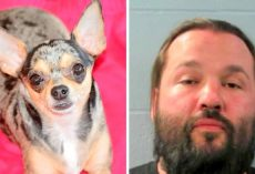 Man Shoots & Kills Chihuahua For Using Family Bathroom, Faces Multiple Charges