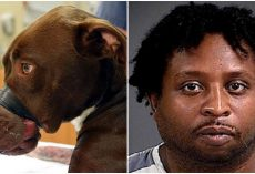 Justice For Caitlyn: Animal Abuser Will Spend 15 Years In Prison
