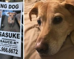He Brought His Owner Back From A Dark Place, Now This Lost Dog Needs To Be Brought Home