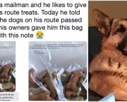 Mailman Gives Treats To Dogs On Route – When 1 Died, Owners Left Him Sweet Note