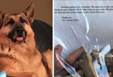 Dog Passes Away But Has A Request For The Mailman Who Always Gave Her Treats