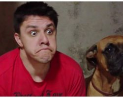 Dog Throws A Hilarious Fit When His Human Starts Imitating His Every Move