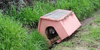 Dog Sat In Her Doghouse Dumped On Side Of Road, Hoping Someone Would Notice Her