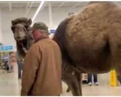 Man Tests PetSmart's 'All Leashed Pets Are Welcome' And Brings A Camel