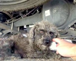 Rescuer Held the Paw of this Stray Dog and Asked Her to Help