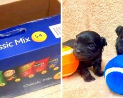 Two Tiny Puppies Found Dumped In A Chips Box In Trash, Police Looking For Info