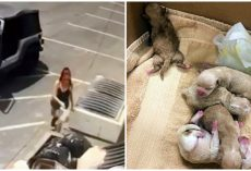 Woman Caught On Video Tossing Bag Filled With 7 Newborn Puppies Into Dumpster