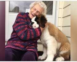 Lonely 95-Year-Old Widow Feels Like A Kid Again When Pup Comes To Visit