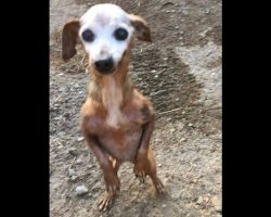 Senior Dog Is Abandoned And Left To Die On A Busy Freeway, Until One Driver Spots Her