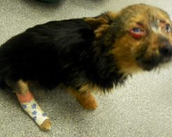Teens break dog's legs and set him on fire, but he survives and still loves humans