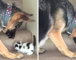 Dog Sees Tiny Kitten Struggling To Climb Stairs, And He Just Can't Help Himself