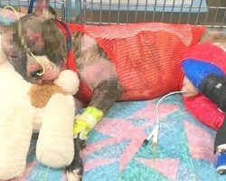 Update: Tommie's Death Causes Ripple-Effect, Bill Signed To Make Animal Cruelty A Felony