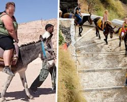 Tourists Urged To Stop Riding Donkeys Up Santorini's Steep Steps