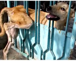 Starving Stray Stuck In Gate Was Ignored By Everyone 'Til They Finally Show Up