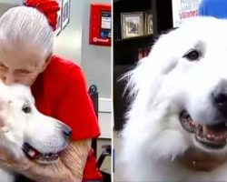 106-Pound 'Gentle Giant' Spends His Days Comforting The Residents At Texas Nursing Home