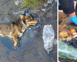 A Little Dog Trapped In Tar Kept On Barking Until Someone Heard Him