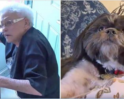 Elderly Woman Credits Shih Tzu For Saving Her Life After A Medical Emergency
