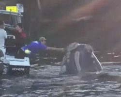 A Whale Kept Swimming Up. That's When Fishermen Noticed Something Was Wrong