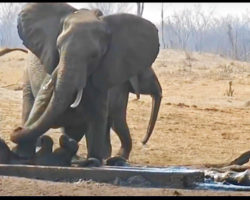 Abandoned Baby Elephant is Drowning Until Another Elephant Performs a Miracle Rescue