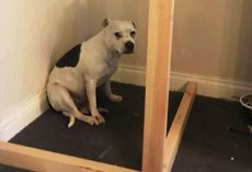 Dad Built A Beautiful Room For His Rescue Dog Who Was Overwhelmed By Anxiety