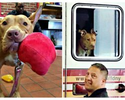 Abandoned Pit Bull Left Behind By Her Family Now Has The Best Life