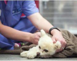 His Master Beat Him For Peeing Inside, Brain-Damaged Dog Deemed Unworthy