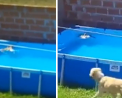 Bird Seen Drowning In The Pool, But The Family's Dog Comes To The Rescue