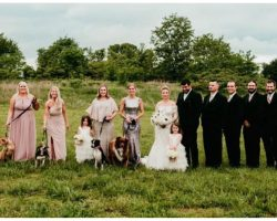 Clever bride has bridesmaids carry shelter dogs down aisle instead of bouquets