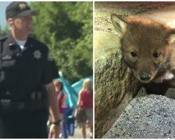 Trooper Doesn't Abuse Power, Instead Assists Coyote Pup Stranded On Busy Street