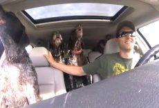 Dad Put Camera In Car To Show 4 Dogs Flipping Out When They Hear They're Going To The Dog Park