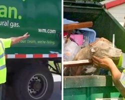 Owners Wanted Her To Be Crushed To Death, So They Threw Her In A Garbage Truck