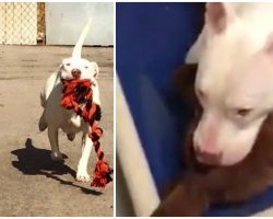 Deaf Shelter Dog Shakes And Cries So Hard When Her Kennel-Mate Gets Adopted