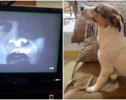 "Dog Watching Horror Movie ""The Conjuring"" Prove That He's A Big Scaredy-Cat"
