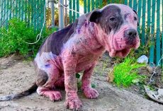 Dog Is Beaten, Spray-Painted And Burnt For Fun- Police On Lookout For Information