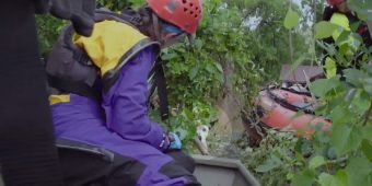 Dog abandoned in floodwaters for days was found clinging to tree by rescue team