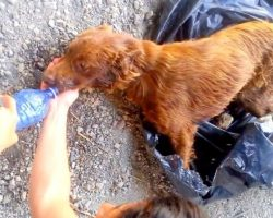Dog Tied-Up In Garbage Bag And Left By A River Bed To Rot, Watch When She sees the Rescuers