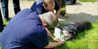 Firefighters act quickly to save 14-year-old dog from burning, smoke-filled home
