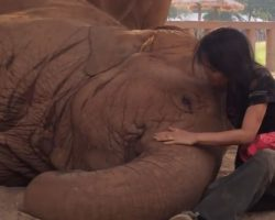 Elephant's Caretaker Swats At Her With A Rag, But It's The Next Move That Wins Everyone's Heart