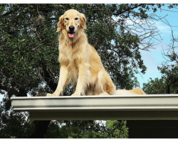 Family Makes Sign To Explain Why Their Dog Is On The Roof And It's Hilarious