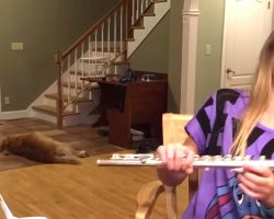 Girl Is Trying To Practice Flute But Instead The Dog Has Internet In Hysterics