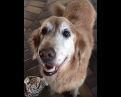 Anxious Dog Gets Her Cancer Test Results, And She Can't Control Her Emotions