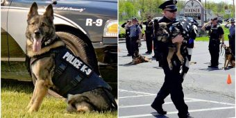 Officers Salute Fellow K-9 As He Took His 'Final Walk' Before Being Put To Rest