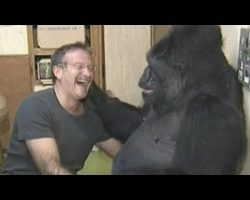 Koko the gorilla mourns the loss of her special friend, Robin Williams