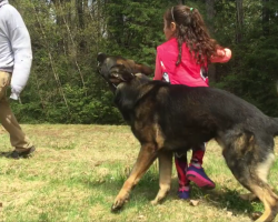 Loyal Dog Follows Little Girl's Every Word, Has Her Back When Intruder Approaches