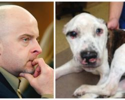 Man Finally Sentenced 8-10 Years In Prison After Public Outcry For Torturing Dog To Death