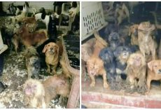 Over 100 Animals Removed From Inhumane Deplorable Conditions At Woman's Home